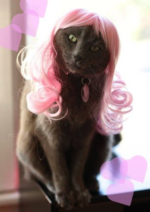 bret michaels without wig. Behold: Kitty Wigs, a Web site