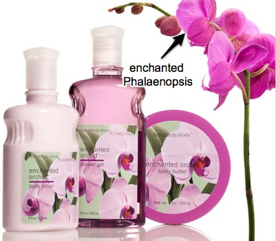 bath-body-works-enchanted-orchid.jpg