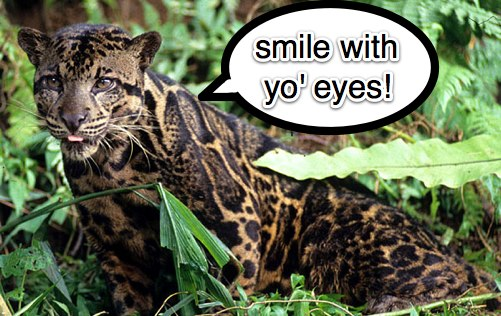 leopard-smile-with-your-eyes