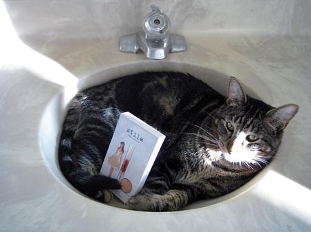stila kitten collection and tabs