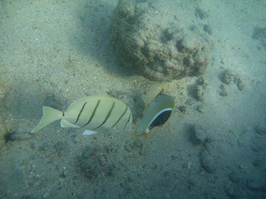 Hanauma Bay, Oahu, Hawaii - Snorkeling and seeing fishies
