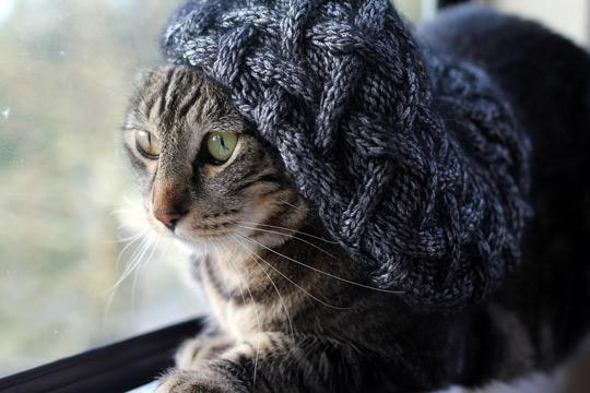Tabs The Cat International