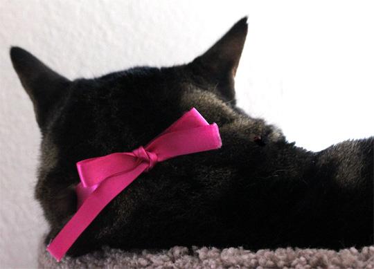 tabs wearing a pink ribbon