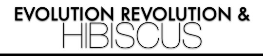mac evolution revolution lipglass Hibiscus
