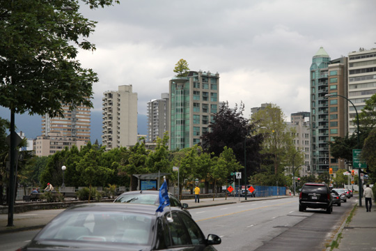 vancouver rooftop tree
