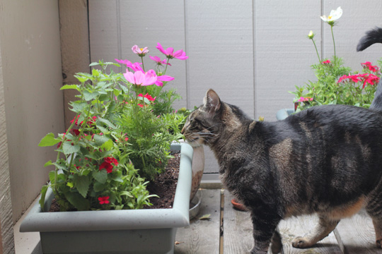 Cat friendly deck garden