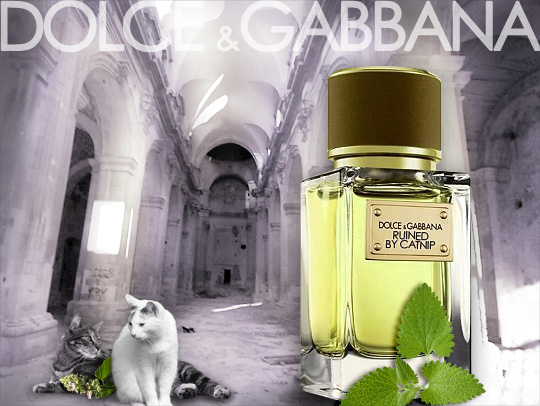 Tabs for Dolce & Gabbana Ruined by Catnip