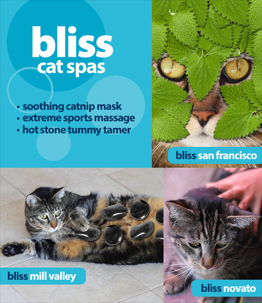 Tabs for Bliss Cat Spas