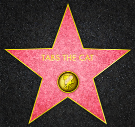 Tabs on the Hollywood Walk of Fame