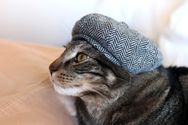 Kitty newsboy cap