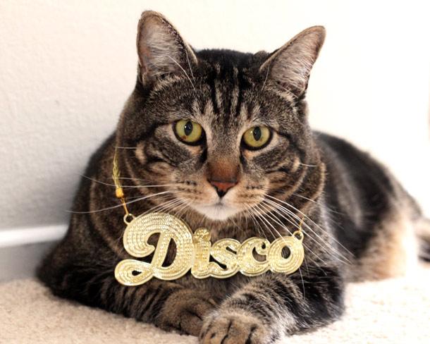 disco tabby