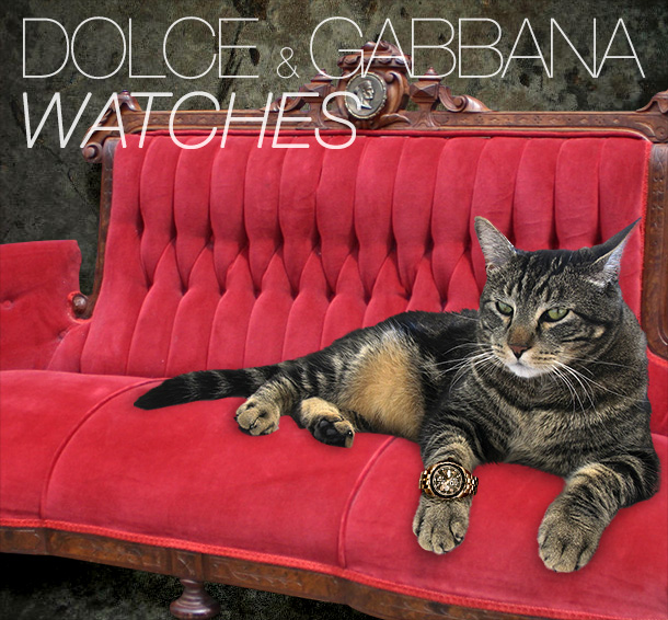 Tabs for Dolce & Gabbana Cat Watches