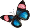 butterfly-chanel-120