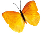 yellow-flutterby