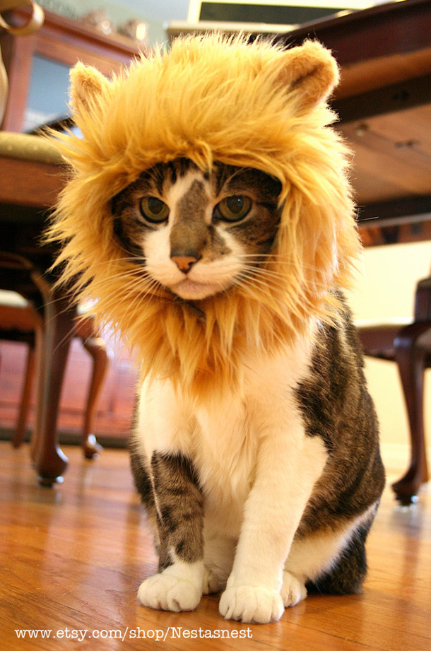 Lion Hat For Cats $50