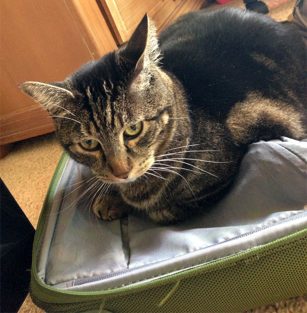 Tabs-in-suitcase