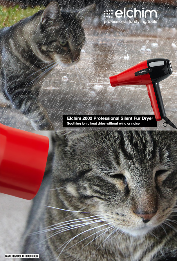 Tabs the Cat for the Elchim Profesional Silent Fur Dryer