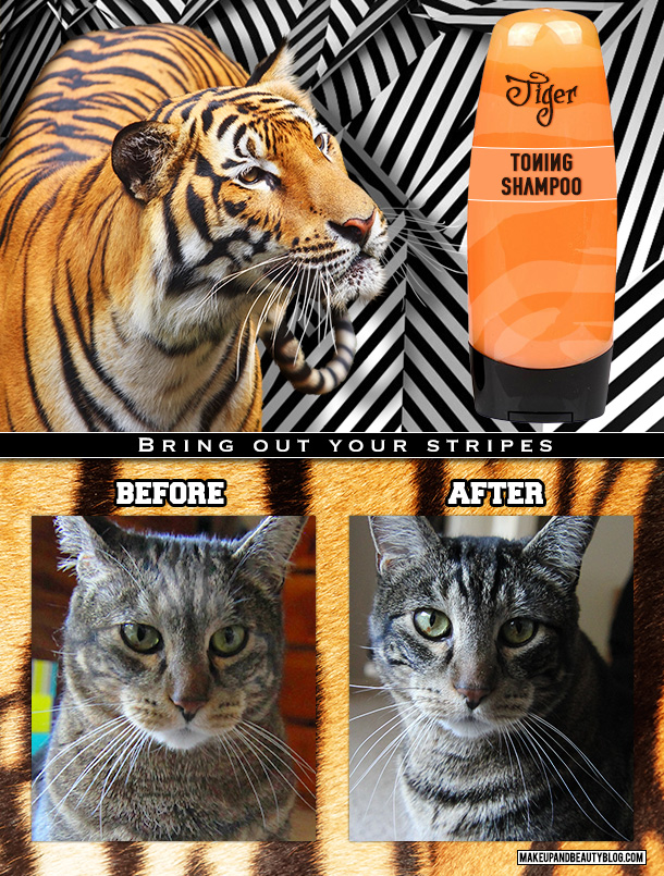 Tabs the Cat for Tiger Toning Shampoo