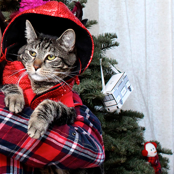 Tabs in his Christmas outfit
