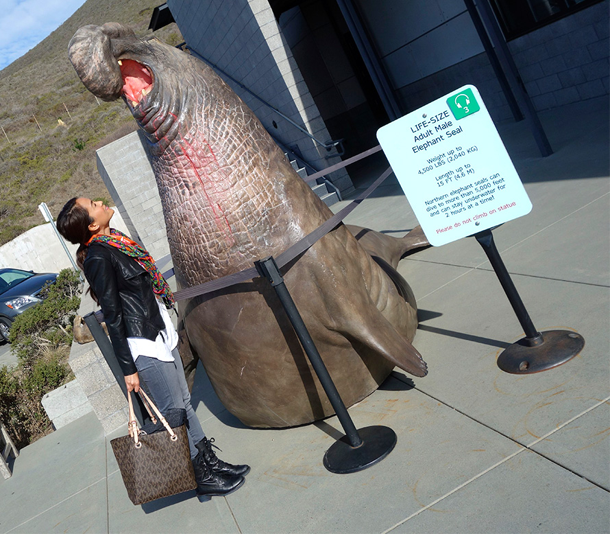 With a lIfe-size adult male elephant seal statue in the front of The Marine Mammal Center
