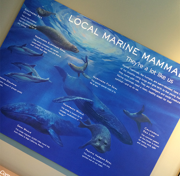 Local Marine Mammals