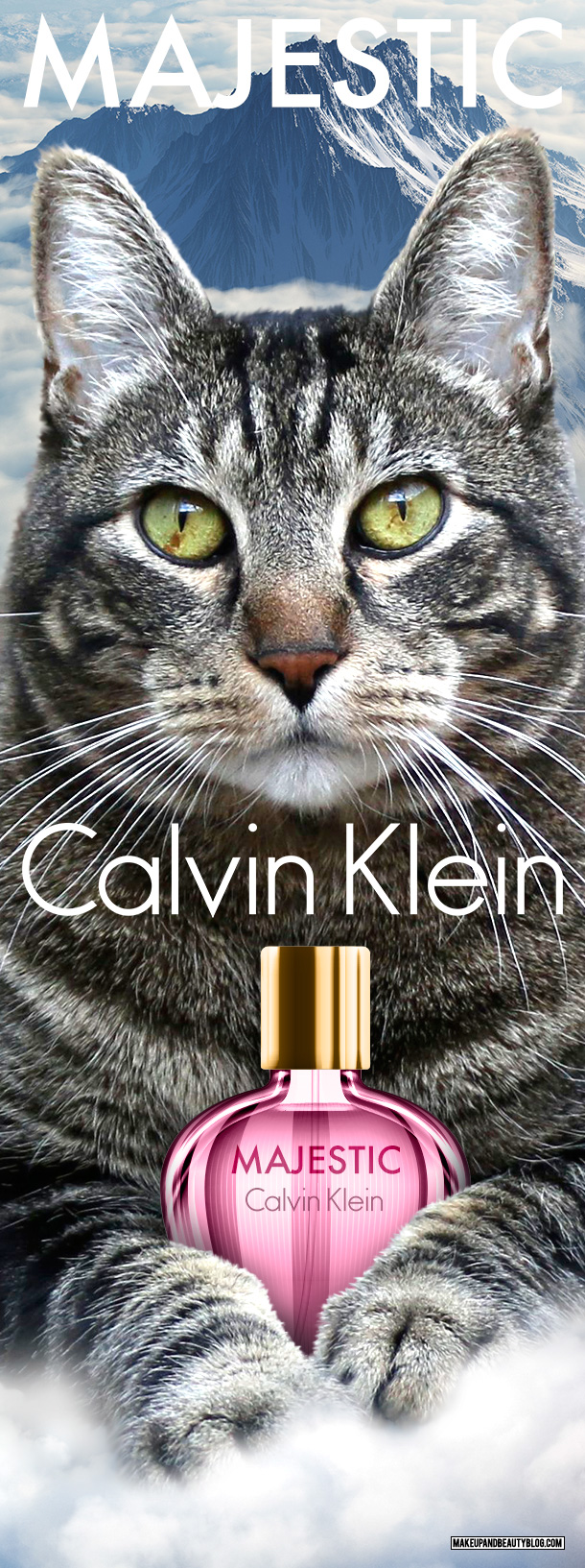 Tabs the Cat for Calvin Klein Majestic