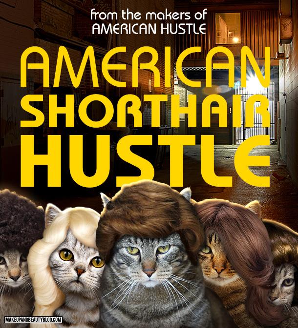 Tabs the Cat starring in American Shorthair Hustle