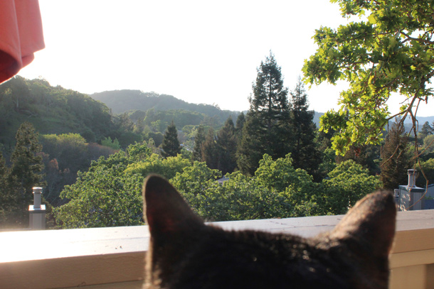 tabbys-eye-view-novato-610