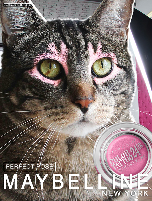 Tabs the Cat for Maybelline Color Tattoo Eye Shadow in Perfect Pose