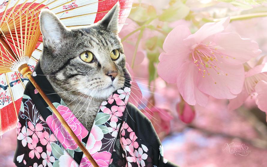 Cherry Blossom Tabby