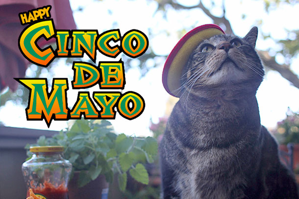 Happy Cinco de Mayo!