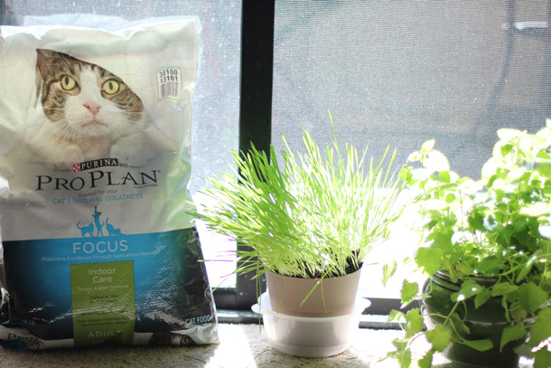 Tabs for Purina Pro Plan