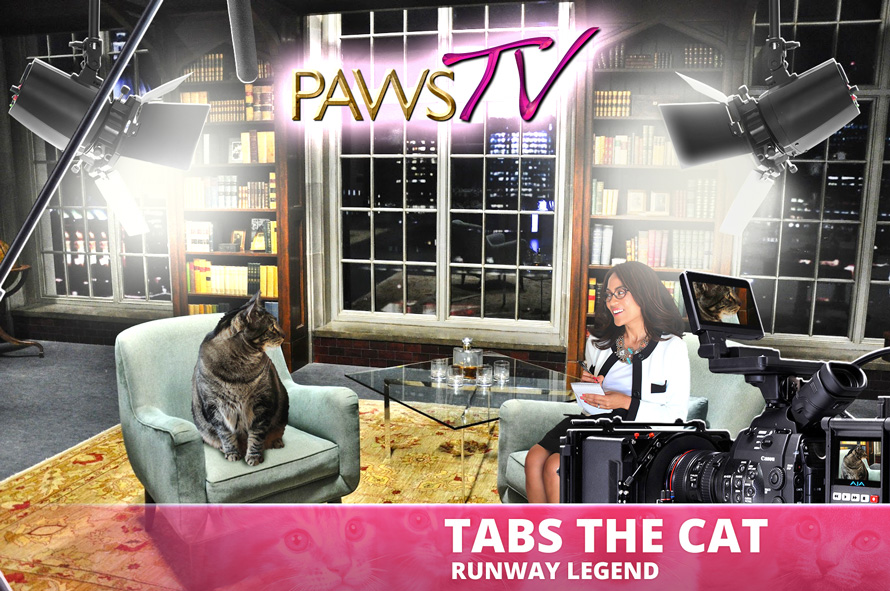 Tabs the Cat, Makeup and Beauty Blog Mascot