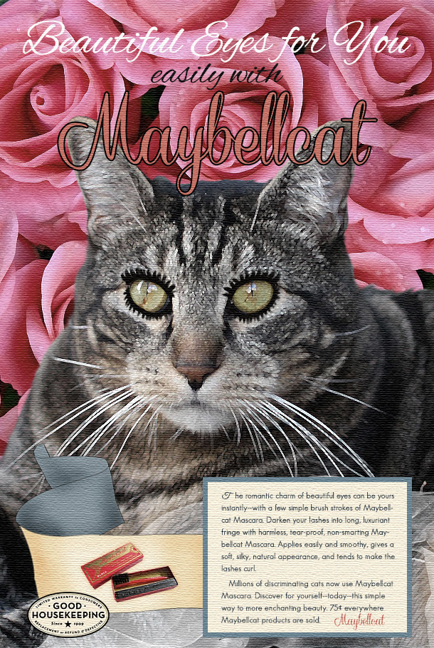 Tabs the Cat for Maybellcat Mascara