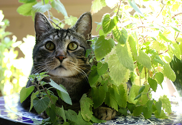 Tabs with his catnip plant (5)