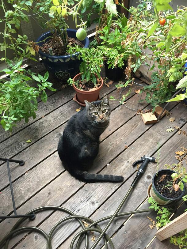 Little kitty gardener