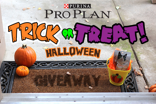 The Purina Pro Plan Cat Treats Halloween Giveaway