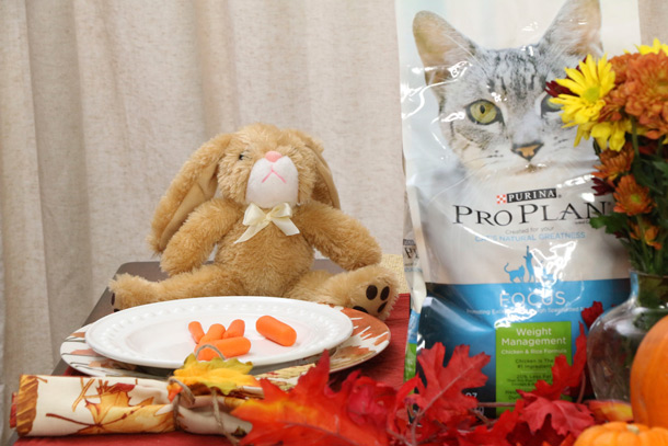 tabs-purina-thanksgiving-3