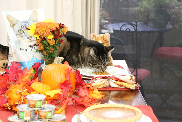 tabs-purina-thanksgiving-5