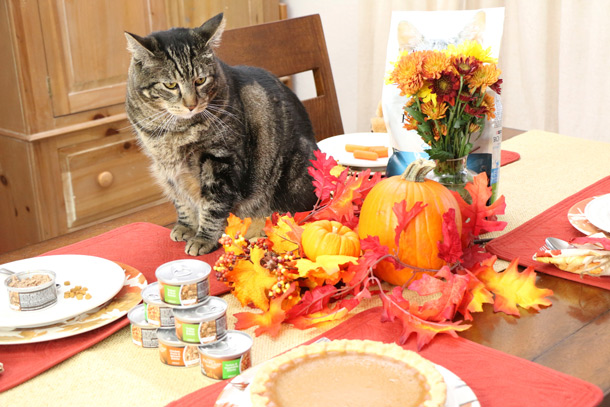 tabs-purina-thanksgiving-6