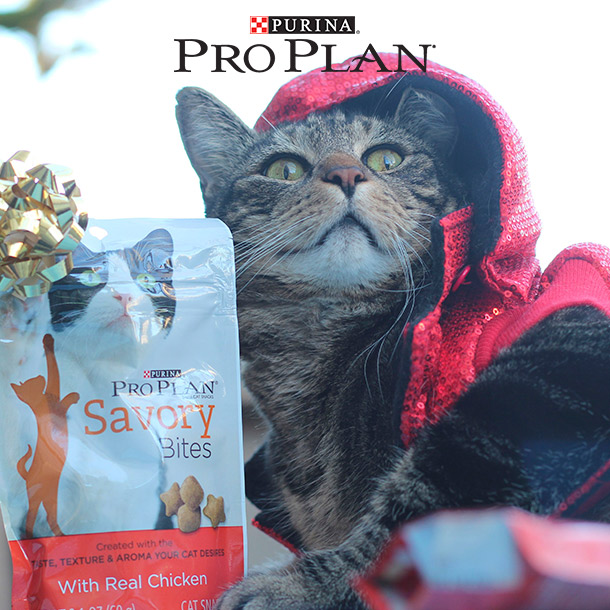 A Purina Pro Plan Cat Treat Giveaway