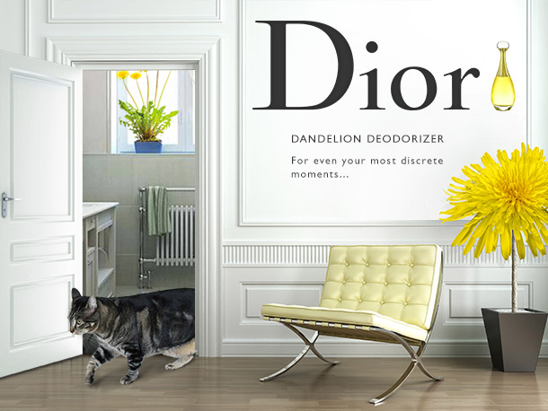 Tabs for new Dior Dandelion Deodorizer