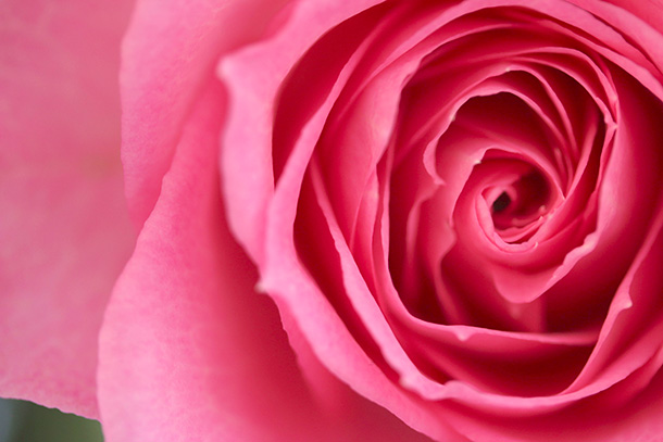 Valentines-Day-Flowers-3