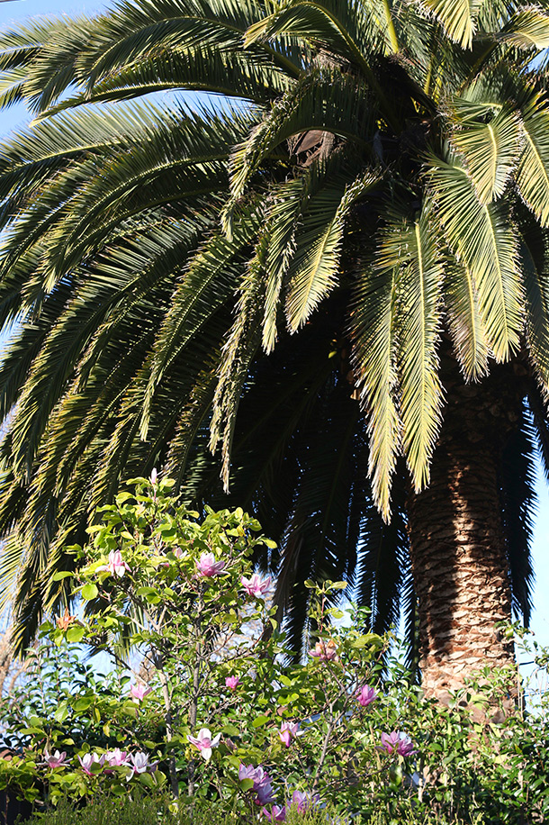 palm-trees-flowers-novato