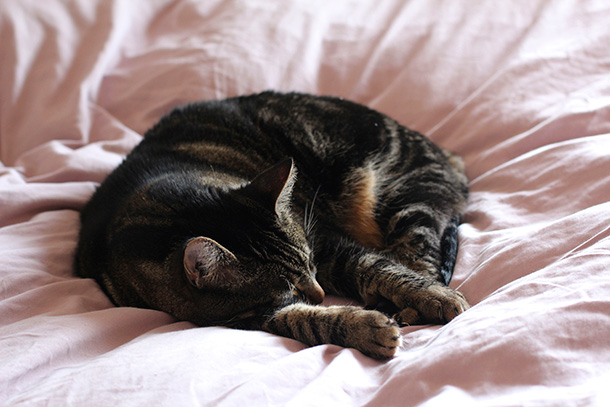 Tabs napping