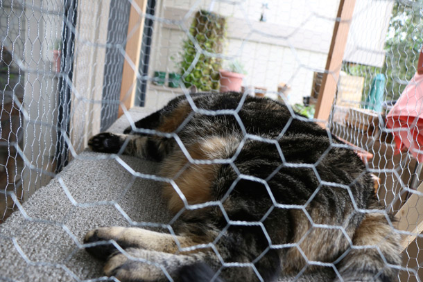 DIY cat enclosure