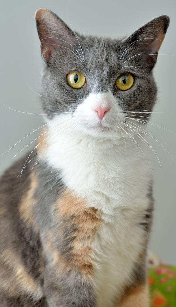 Cat littermates