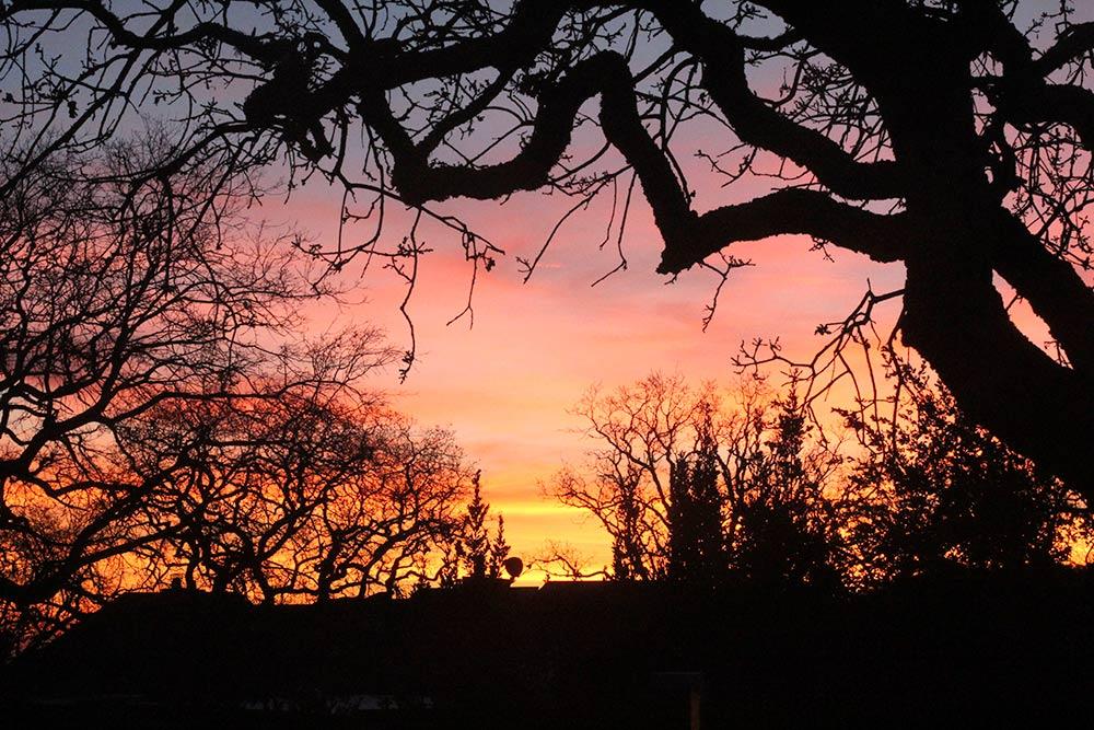 A Novato pink sunrise