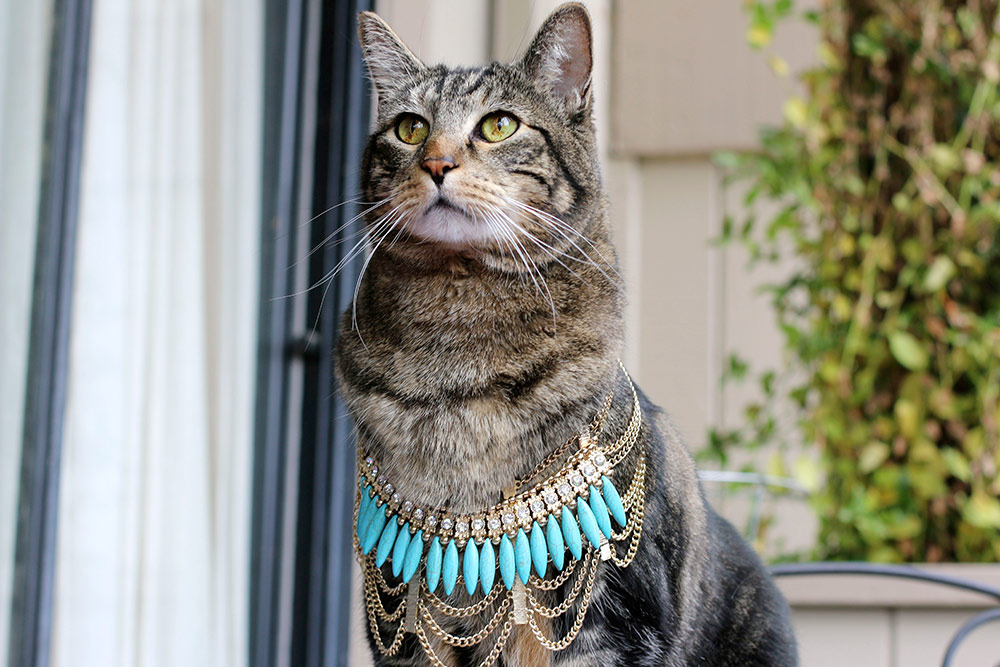 Kristin Perry Webbed in Turquoise Necklace