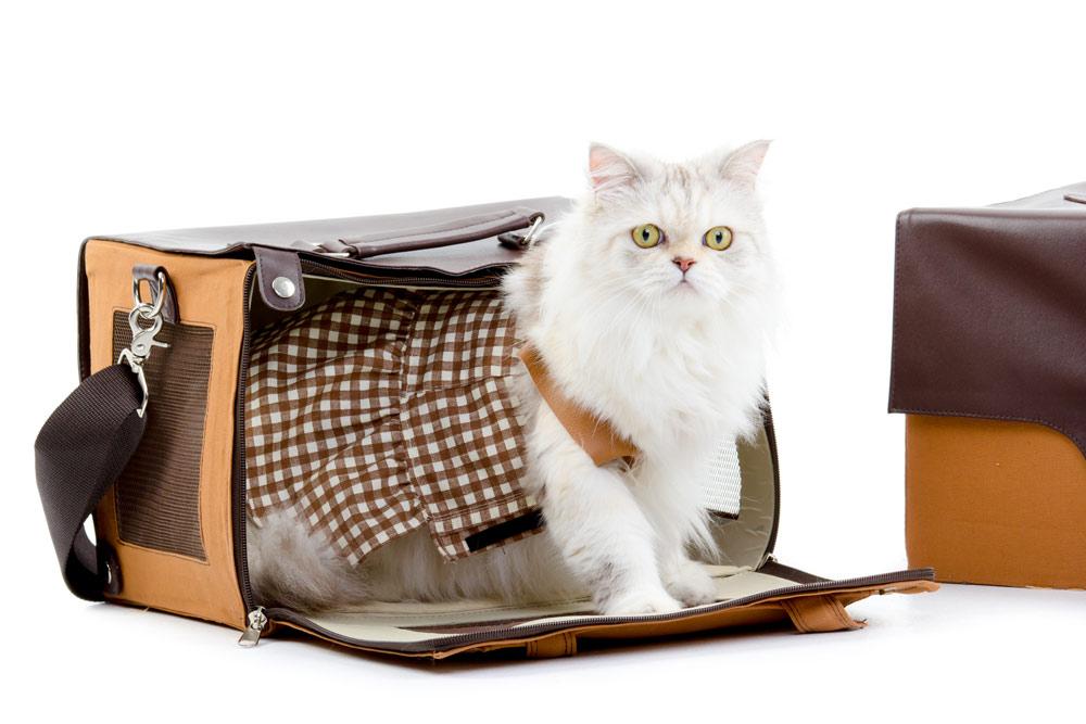cat-career-move